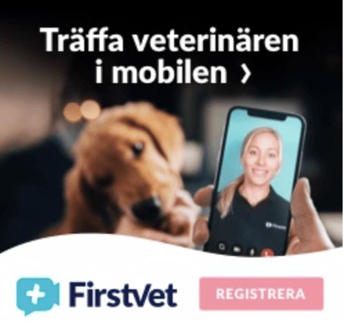 Veterinär på nätet – Gratis?