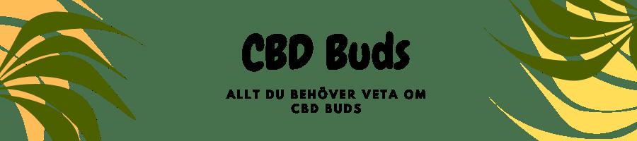 CBD Buds